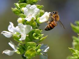 """We are dependent on their pollination"". Courtesy of Google ""free to use"" images."