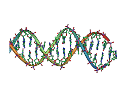 Media Google double helix images
